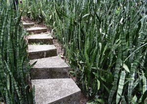 Sítio Burle Marx: escada com 400 degraus